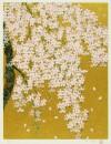 中島 千波 「枝垂れ桜」 Chinami Nakajima