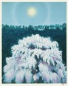 東山 魁夷 「花明り」 Kaii Higashiyama